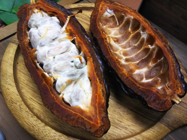 カカオ豆の画像